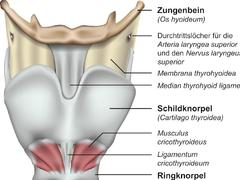 Pflege bei Laryngektomie