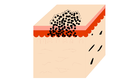 Grundlagen der Hautpflege