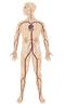 Herzkatheter: Vorbereitung und Versorgung
